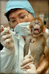 vivisection0524
